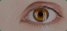 adult digital eye strain